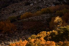 Autumnal color, Inyo National Forest, California Stock Photos