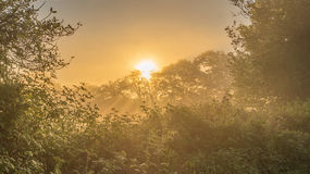 First Golden Light of Morning Radiating Through the Sussex Trees stock photography