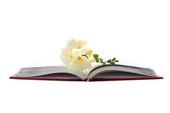 First love. Delicate white flower on a red covered book Royalty Free Stock Images