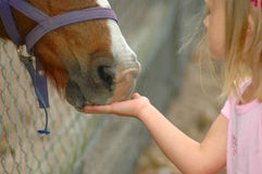 First love. A little white hand of a beautiful caucasian girl child feeding a horse on a paddock of a farm royalty free stock images