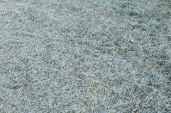 First morning frost grass lawn in  fall Royalty Free Stock Image