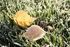 First morning frosty leaves. First morning with frozen grass and leaves stock photos