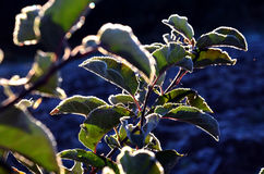 First  november frost on a leaves Royalty Free Stock Images