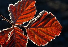 First  november frost on a leaves Royalty Free Stock Photos