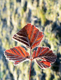 First  november frost on a leaves Stock Photos