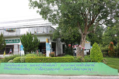 First Para Rubber Tree of Thailand Stock Photography