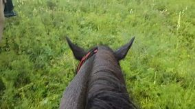 First-person view of the head and mane of the horse . Walk the horses on the colorful field. Family horse riding. stock video footage