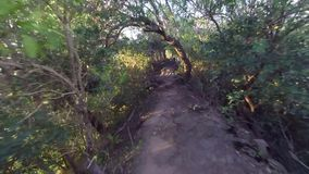 First person view of trail runner stock video footage
