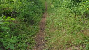 First-person view of the trail and wild forest lit by the summer sun after rain. First-person view of the trail through a wild forest, lit by the summer sun stock footage