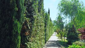 First-person view. Walk along trees along a path in a beautiful park on a sunny summer day.  stock footage