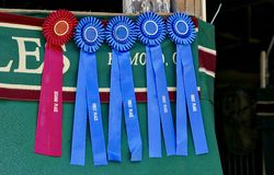 First Place Winner Ribbons Stock Photo