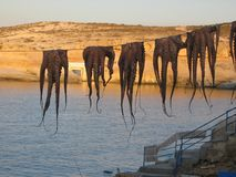 First plane of five hanging octopusses in the sunset of a fishing village to Milos island in Greece. Five hanging octopusses in a fishing village. Hanging royalty free stock photos