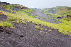 First plants on volcano gentle slope Royalty Free Stock Photography