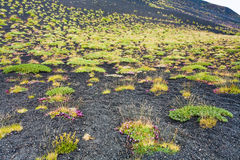 First plants on volcano soil Royalty Free Stock Photo