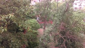 First Rain in Delhi India. A scene of first rain in delhi in which trees looks happy and feel refresh after rain Royalty Free Stock Photography