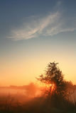 The first rays of the rising sun. Pass through the fog in a field near the lake on a spring morning Royalty Free Stock Photos