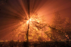 The first rays of the rising sun. In misty forest Stock Photography