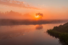 The first rays of the rising sun at misty river Royalty Free Stock Photo