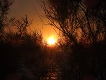 The first rays of the rising sun. Nature Seascape with View of Glowing Sun through A Wild Bush at Gorgeous Orange Sunrise. The first rays of the rising sun in stock image