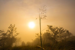 The first rays of the rising sun Royalty Free Stock Images