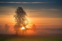 The first rays of the sun breaks through the branches of a tree Stock Image