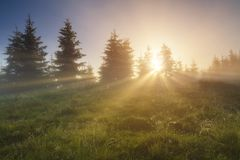 The first rays of the sun at dawn in a misty forest.  Stock Images