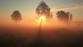 The first rays of the sun shine through the fog stock video footage