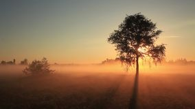 The first rays of the sun shine through the fog stock video