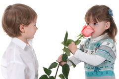 First rose from admirer Royalty Free Stock Image