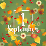 First September Autumn Background. 1 September Autumn Background. Bright autumn birch, oak, maple, chestnut leaves and berry with flowers light background Royalty Free Stock Photo