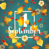 First September Autumn Background. 1 September Autumn Background. Bright autumn birch, oak, maple, chestnut leaves and berry with flowers light background Stock Image