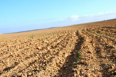 The first shoots. Kind of the ploughed field and the first sprouts on it Stock Images