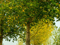 First Signs of Autumn Stock Image