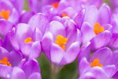 First signs of spring Stock Photography