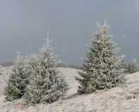 First snow Stock Photography