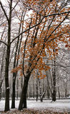 The first snow. First snow in Nobember in a city park stock image
