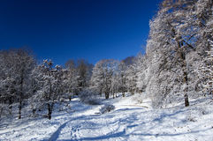 First Snow. Fresh snow in the park royalty free stock photo
