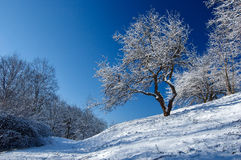 First Snow. Fresh snow in the park Stock Image