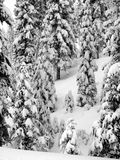 First snow. Trees covered with snow stock image
