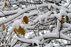 First snow. On branches of trees Royalty Free Stock Photography