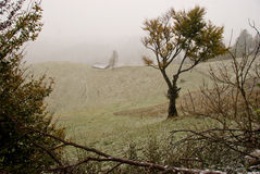 First snow. Late autumn, first snow on a romanian hills Stock Photo