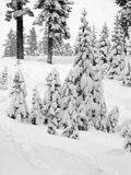 First snow. Trees covered with snow royalty free stock image