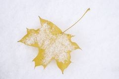 First snow. Yellow maple leaf lightly covered in snow royalty free stock photography