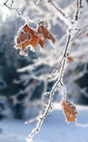 First Snow Royalty Free Stock Photos