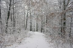 First snow. Snow-covered road in a forest Stock Images
