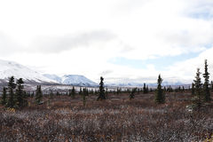 First Snow in Alaskan Valley. A light dusting of snow in a tundra valley in Denali National Park Alaska Royalty Free Stock Photo