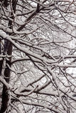 First snow. The first snow also sweeps a blizzard Royalty Free Stock Images