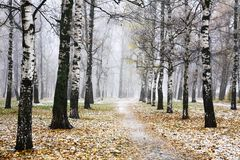 First snow in autumn city park. First snow in autumn mist city park Stock Images
