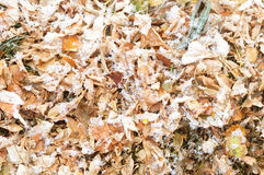 First snow on autumn falling leaves background. First snow after snowfall on autumn falling leaves background , winter is coming royalty free stock photography