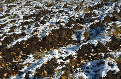 First snow on the autumn field Stock Image